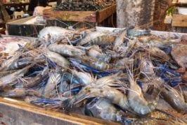 สิงโตทะเล Seafood BBQ Buffet