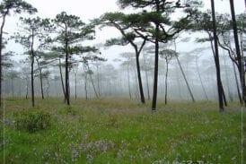 อุทยานแห่งชาติภูสอยดาว พิษณุโลก